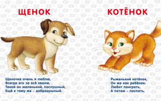 Короткие стихи про животных: детские маленькие стихотворения для детей