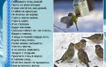 Стихи про птиц для школьников, детей русских поэтов: стихотворения про птичек классиков