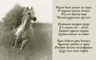 Стихи про лошадей, коней: красивые стихотворения русских известных поэтов для детей, взрослых