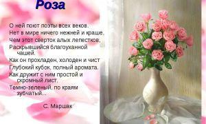 Стихи о розах: красивые стихотворения про цветок розу классиков для детей, взрослых